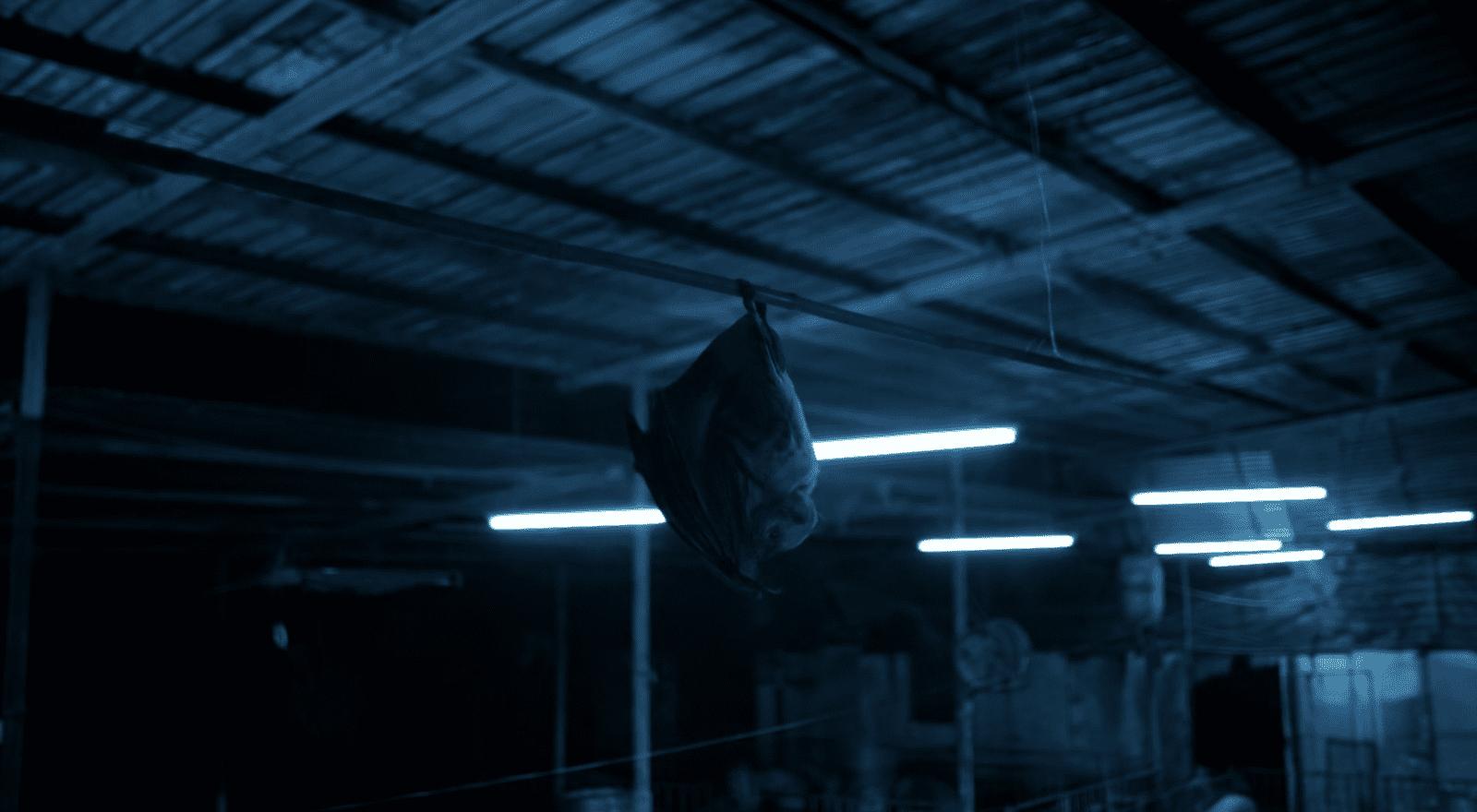 Das Virus stammt von einer Fledermaus. Filmstill aus Contagion (Soderbergh 2011).